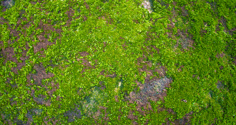 Natural Mossy Growth