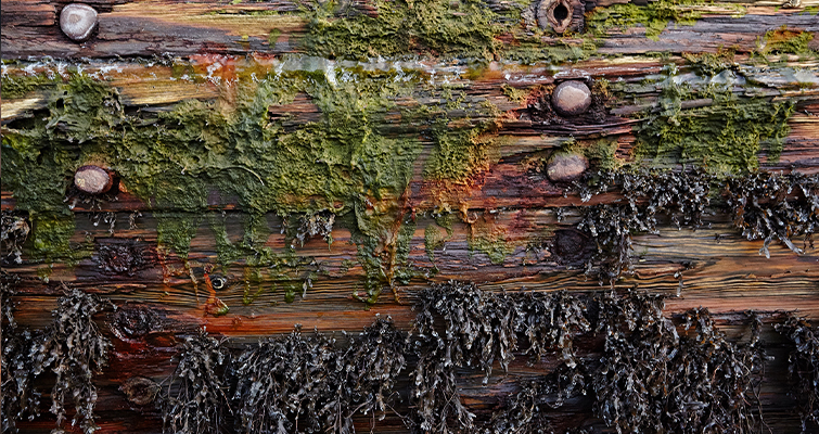 Moss and Saltwater Damage on Wood